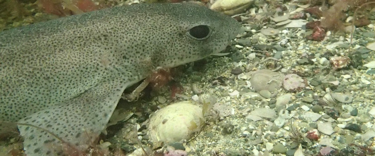 Permalink to:Reef Dives